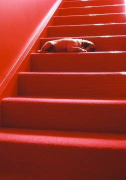 mitchinson_red stair + dog