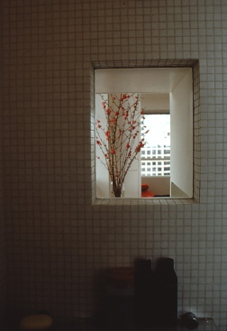 Perraton Apartment 25_zen view window from shower_Stephen Varady Photo ©